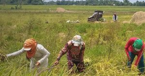 Asian studies on agri initiatives for food security, sustainability published in latest journal